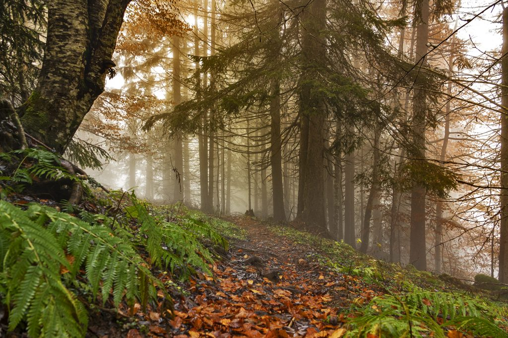 lockdown autumn path